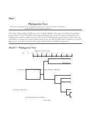 POGIL Phylogenetic Trees- - Why Phylogenetic Trees How do ...