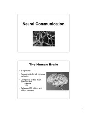 Lecture 5 - Neurons
