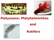 Lecture 19 - Platyhelminthes and rotifers bio1500