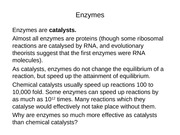 05 Enzymes