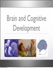 Clps 0040 Introduction To Cognitive Neuroscience Brown