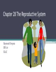 24 Lecture 24 The Reproductive System_Slides.pdf