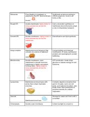 Subcellular structures - matching.docx