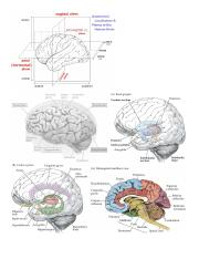 Brain Diagrams.pdf