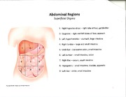 Anatomy Abdominal Region Notes