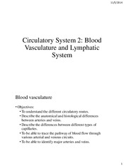 Lecture 8 Circulatory system vasculature and lymphatics (2 slides)