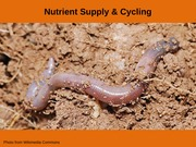 Lecture22_NutrientSupplyAndCycling_Fall2014