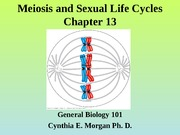 Chapter 13 Meiosis and Sexual Life Cycles(1)