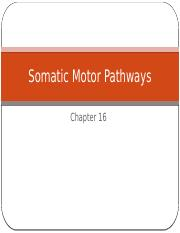 Somatic Motor Pathways.pptx