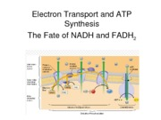BB_LECTURE-14_Electron Transport and ATP synthesis (1)