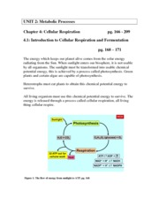 Chpter 4 Introduction to Cellular Respiration and Fermentation