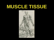 ANP300 Lecture 7-Muscle Tissue