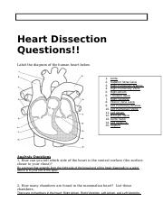 Heart dissection questions heart dissection questions label the heart dissection questions heart dissection questions label the diagram of the human heart below 1 aorta 2 superior vena cava 3 right pulmonary ccuart Choice Image