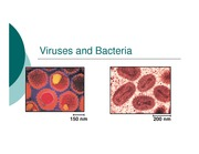 Viruses and Bacteria notes for website
