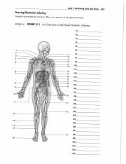 Arteries and Vein Labeling Exercises.pdf