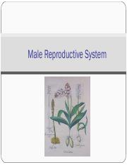 MT 14a- Male Reproductive System.pdf