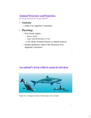 NOTES Animal_Structure_and_Function_and_Thermoregulation