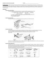 vestigial structures 1 gradual changes have occurred through time that have in - Evidence Of Evolution Worksheet Answers