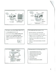 The Endocrine System 6