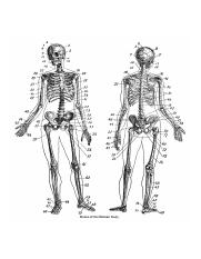 human-skeleton-clip-art-black-and-white_280822.jpg