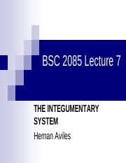 Lecture7 The Integumentary System.pdf