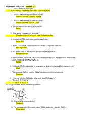 DNA_and_RNA_study_guide_Answer_Key
