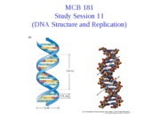 Session 11 (DNA Structure and Replication)