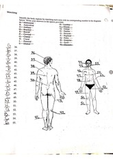 body part labeling