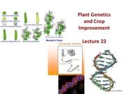 Lecture 22genetics and crop improvement