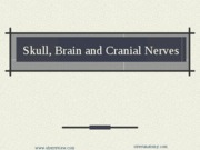 7 - Skull, Brain, CN Grays