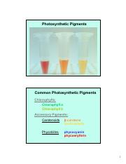 Lab G TA present Pigments plus TLC TA Presentation - updated 2-14-14