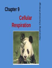 Chapter_9-Cellular_Respiration-Biol108-SS2012F