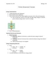 Cellular Respiration Concepts