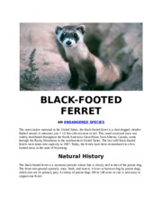black footed ferret project.docx
