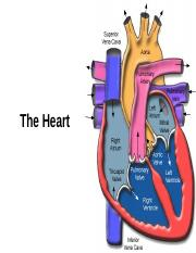 Lesson 2 - The Heart.ppt