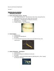 Insects and Society Study Guide