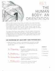 Coloring Workbook Ch1 Key - tea THE HUMAN BODYzAN OREENTATEQN Most ...