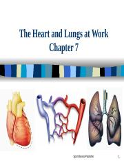 PPT KIN CH 7 Heart and Lungs.ppt