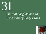 Biol131 Animal Origins and the Evolution of Body Plans1