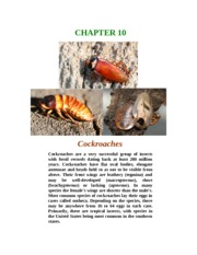 Chapter 10 Cockroaches