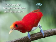 Lecture 26_SexualSelection_Speciation_NOTES
