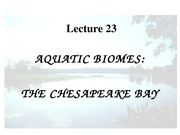 Lecture 23 chesapeake