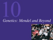 Chapter 10 Genetics-Mendel and Beyond