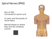 Week 9 Ch. 14 Spinal & Peripheral Nerves Powerpoint Lecture
