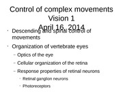 Control+of+complex+movements+and+vision+1