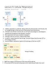 Lecture 9 Cellular Respiration
