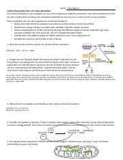 Week 3 Tuesday Cellular Respiration Worksheet.docx