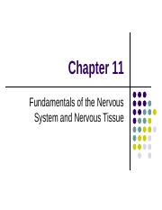 Chapter 11 Fundamentals of the Nervous System and Nervous Tissue Student Notes.ppt