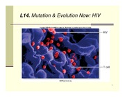 L14- HIV-MutationEvolutionNow