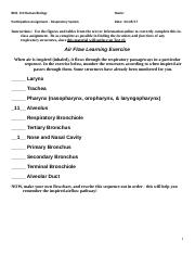 Participation Assignment - Respiratory System.doc
